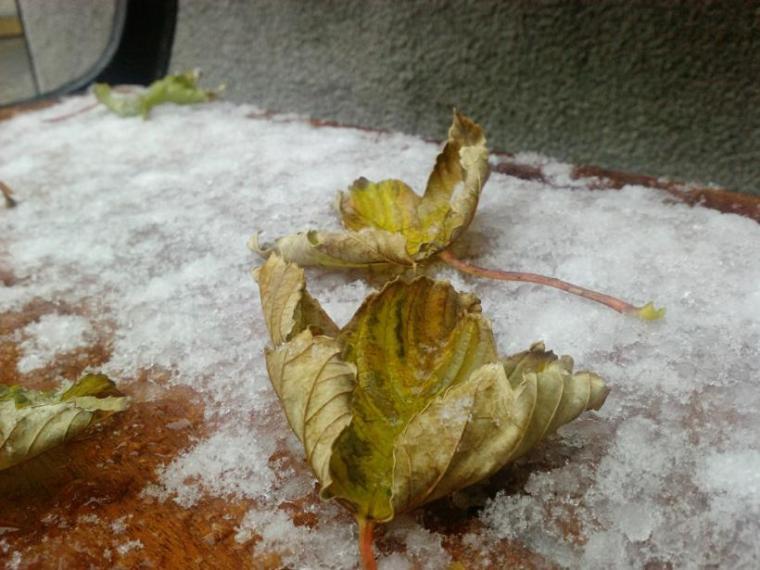 En benk i byen ble overfalt av vinter før høsten rakk å bli borte