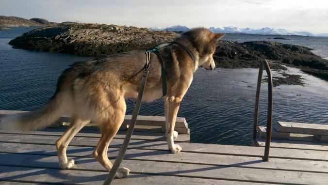En lykkelig hund utforsker ei brygge som bød på mange syn og dufter.