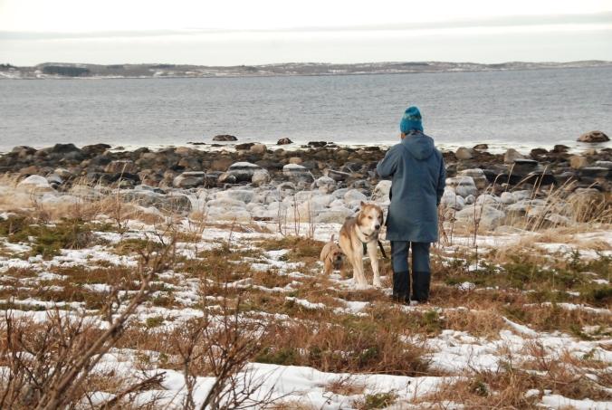 Glade hunder og bra venninne på formiddagstur i fjæra